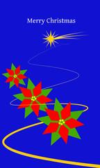 stelle di natale nel blu