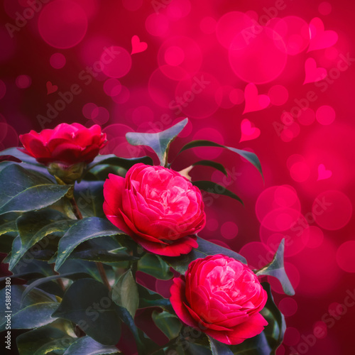Red camellia bouquet of flowers on a celebratory background with