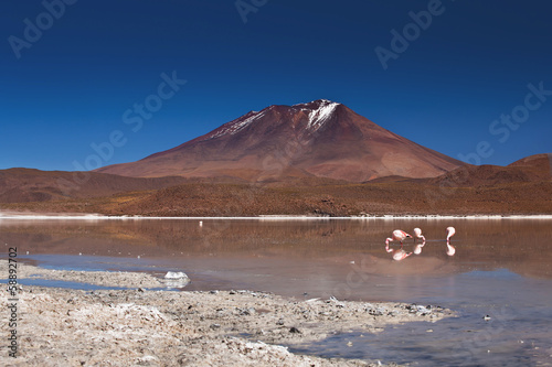 Bolivia - flamingos on laguna Hedionda