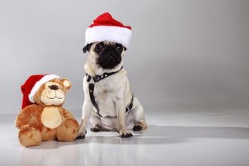 Mopps Hund mit Weihnachtsmütze