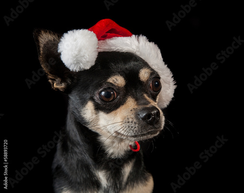 Pet dog wearing Santa hat