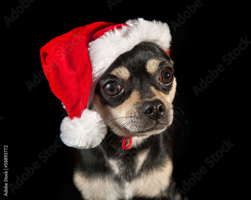 Pet dog wearing a Santa hat