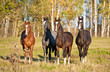 Four beautiful young horses standing at field in autumn