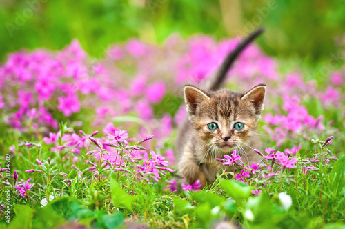 Adorable tabby kitten in flowers