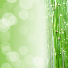 Fond zen carré vert