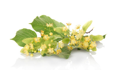 Foliage and flowers of linden