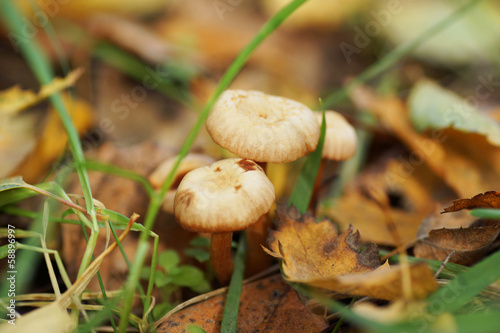Three mushrooms in the forest.