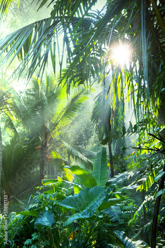 Fotobehang Overige Jungle