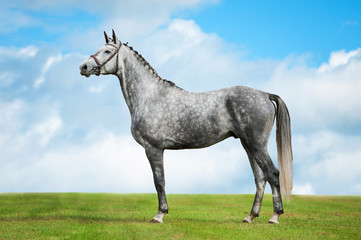 Grey horse on background of clouds