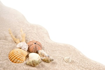 Shell, Coral and Dried Sea Urchins on the sand as background
