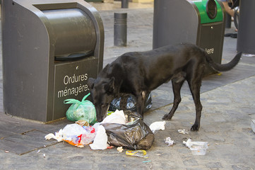 Dog eating litter