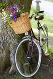 Old Fashioned Bicycle Leaning Against Tree
