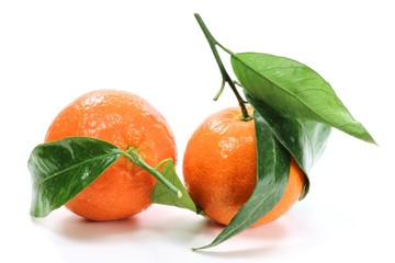 Clementine05