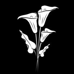 Calla lily black