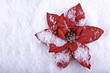 Holiday flowers , red poinsettia on snowflakes background