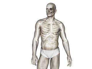 illustration of human body anatomy