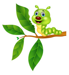 Cute caterpillar cartoon eating leaf