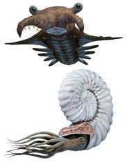 Anomalocaris and Ammonite set