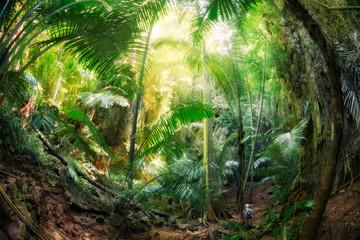Jungle Krabi Thaïlande