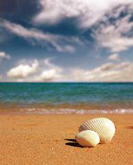 seashells on beach - vintage retro style