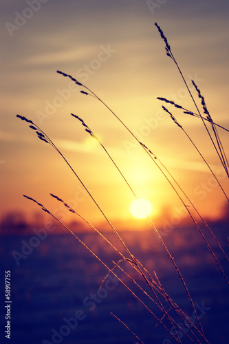 Dry grass against winter sunrise