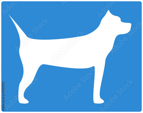 blue background with pit bull terrier image