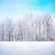 Winter scene - 58922155