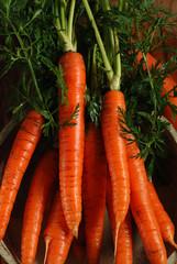 mucchio di carote biologiche nella ciotola di legno