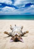 Fototapety cat on  beach