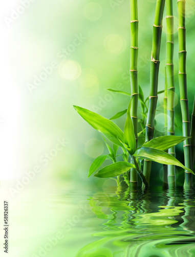 Papiers peints Vegetal bamboo stalks on water - blurs