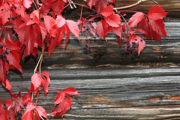 red vine leaves on the wall