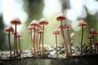 Leinwandbild Motiv small mushrooms toadstools