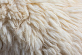Fleece sheep background