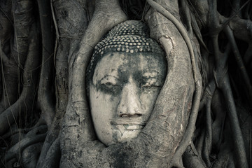 Tête de bouddha. Ayutthaya, Thaïlande