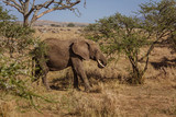 African landscape with eating elephant