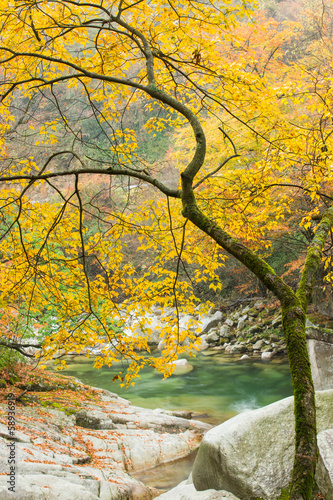 autumn,tree with river background