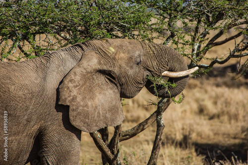 Papiers peints Elephant Eating elephant