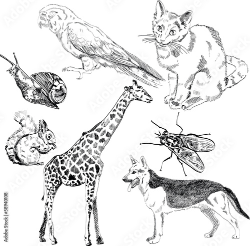 vector set: wild and domestic animals