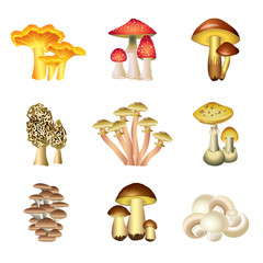 Mushrooms isolated on white vector set