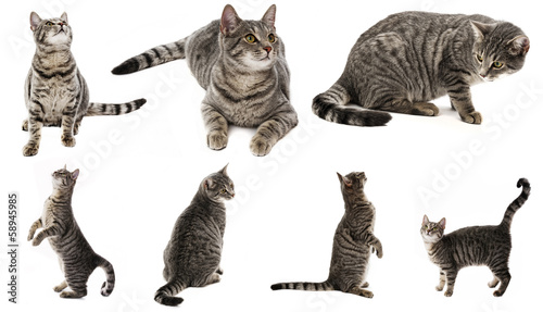 cat isolated on a white background - collection
