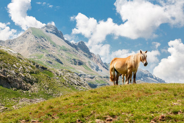 Horse in the French Pyrenees