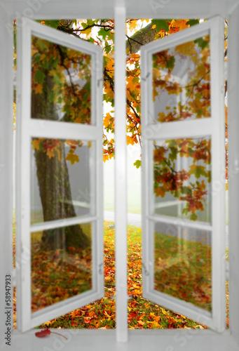Maple tree viewed through window