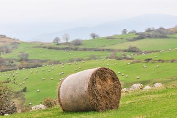 botte de paille dans paysage valloné