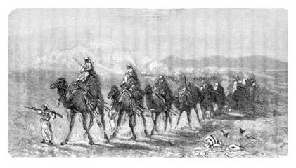Camels : Caravan