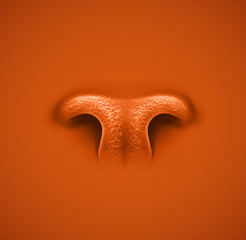 Animal's nose