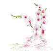 obraz - white orchids on w...