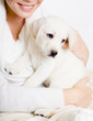 Close-up of white Labrador puppy on the hands of woman