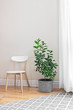 Lemon tree in a bright room