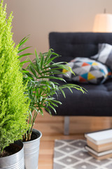 Green plants in the living room