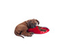 puppy playing with xmas stocking, on white background.